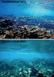 Before and after photos of same reef in the Florida Keys (Phillip Dustan).