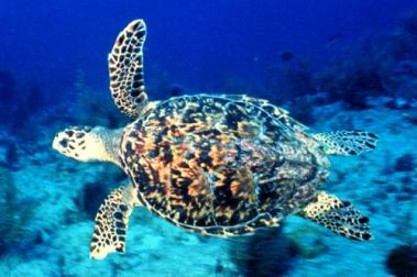 Five species of sea turtles nest in Florida.