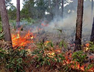 Burning is natural and necessary for pine rocklands, but not so much for Walmart.